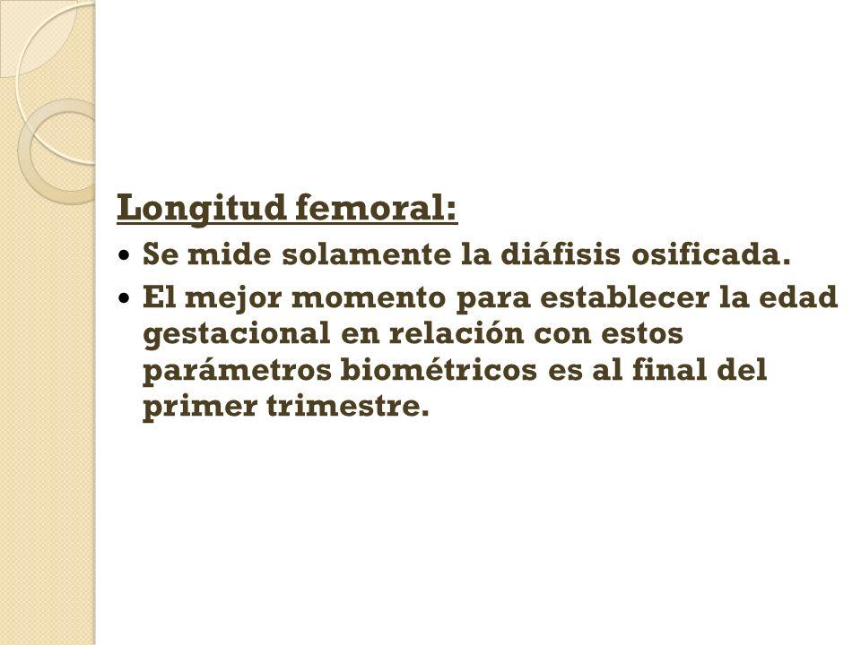 Longitud femoral: Se mide solamente la diáfisis osificada.