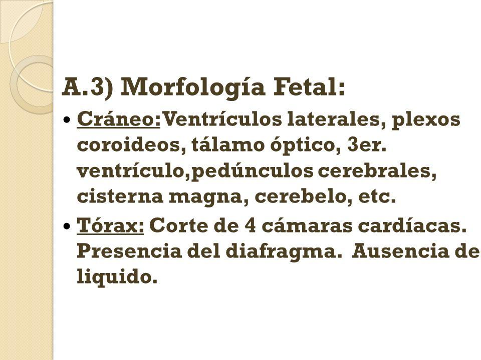 A.3) Morfología Fetal: