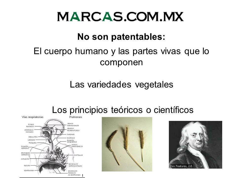 Los principios teóricos o científicos