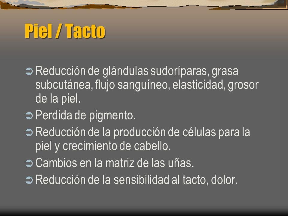 Piel / Tacto Reducción de glándulas sudoríparas, grasa subcutánea, flujo sanguíneo, elasticidad, grosor de la piel.