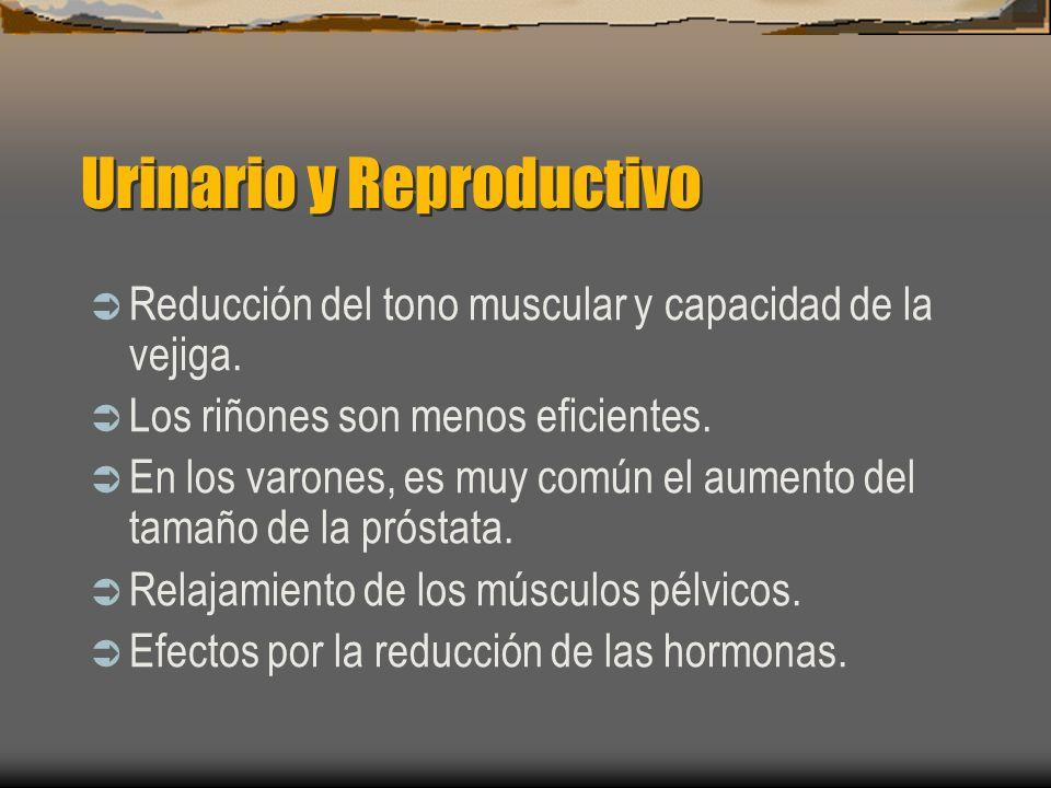 Urinario y Reproductivo