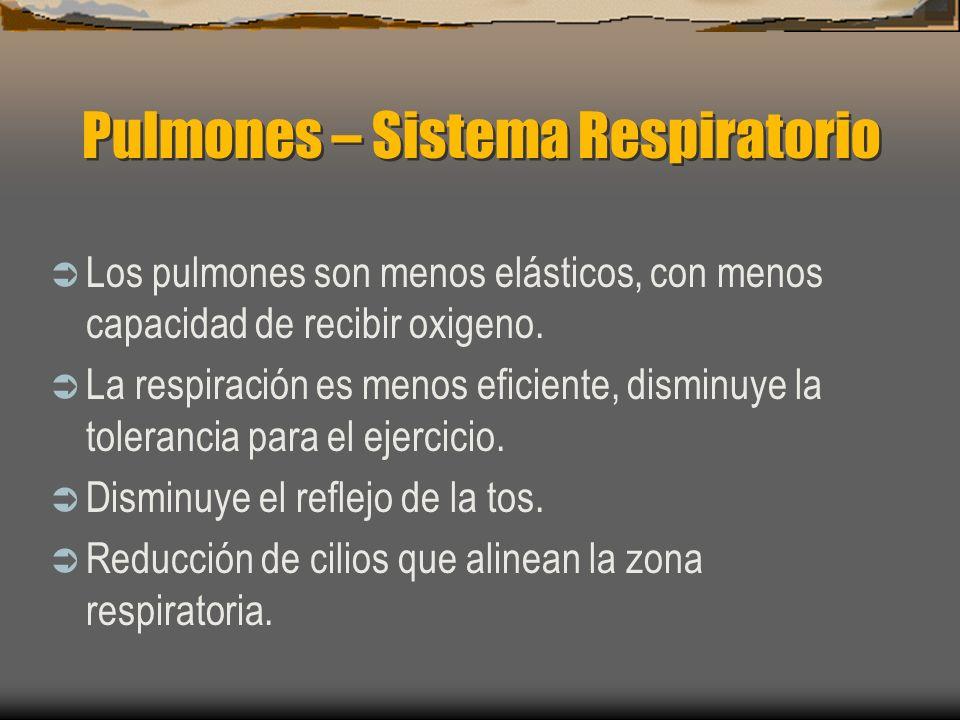 Pulmones – Sistema Respiratorio
