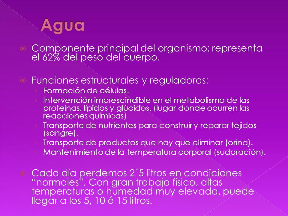 Agua Componente principal del organismo: representa el 62% del peso del cuerpo. Funciones estructurales y reguladoras: