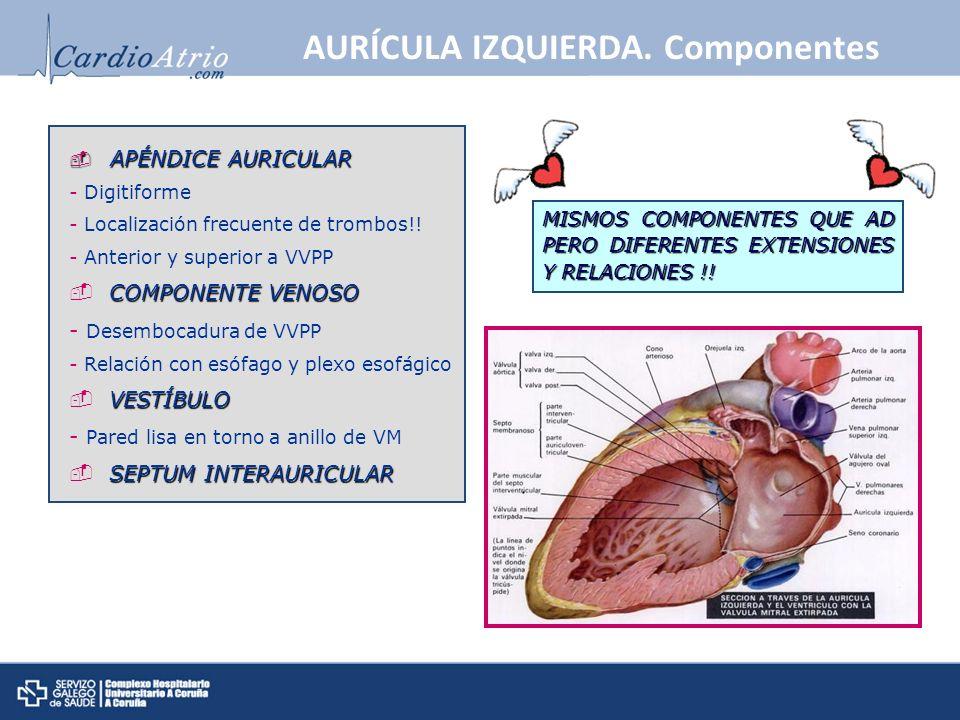 AURÍCULA IZQUIERDA. Componentes