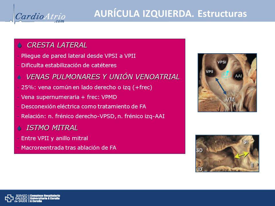 AURÍCULA IZQUIERDA. Estructuras