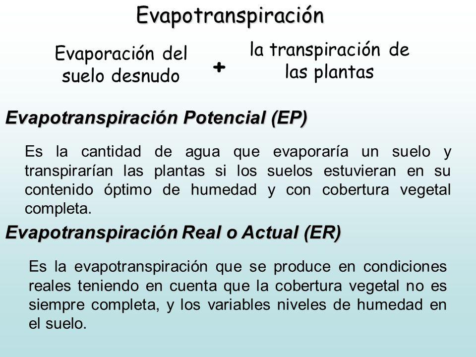 + Evapotranspiración la transpiración de las plantas