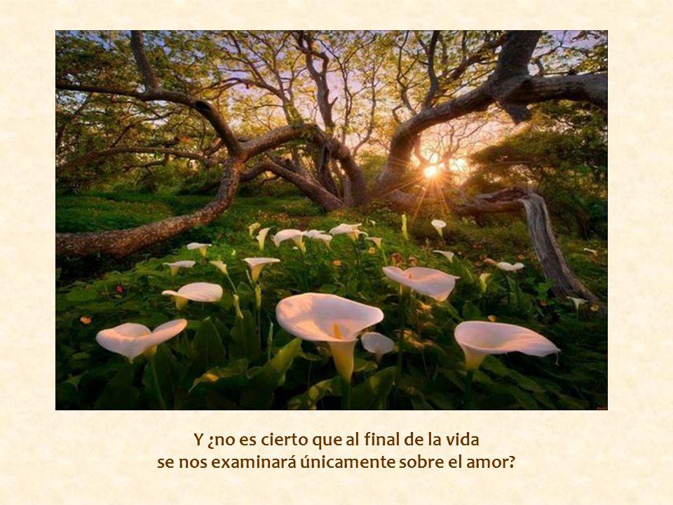 Y ¿no es cierto que al final de la vida se nos examinará únicamente sobre el amor