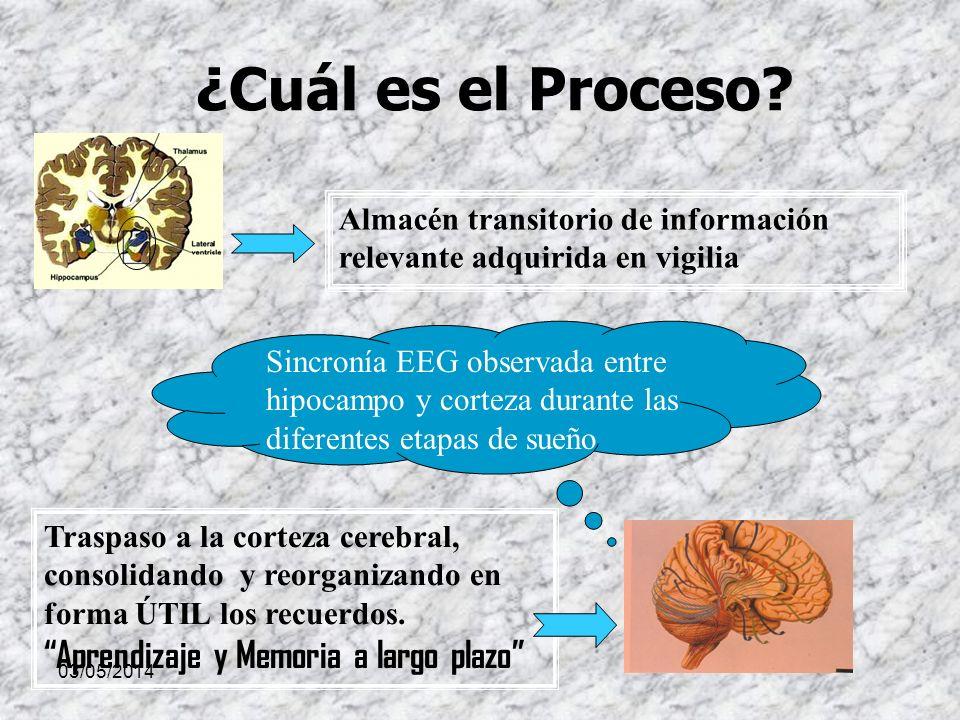 ¿Cuál es el Proceso Almacén transitorio de información relevante adquirida en vigilia.