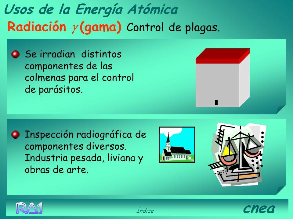 Usos de la Energía Atómica Radiación g (gama) Control de plagas.