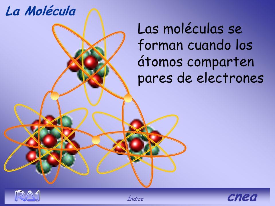 La Molécula Las moléculas se forman cuando los átomos comparten pares de electrones.