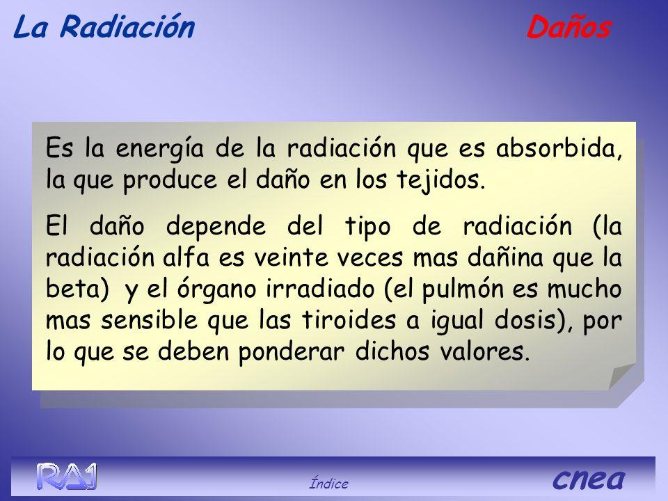 La Radiación Daños. Es la energía de la radiación que es absorbida, la que produce el daño en los tejidos.