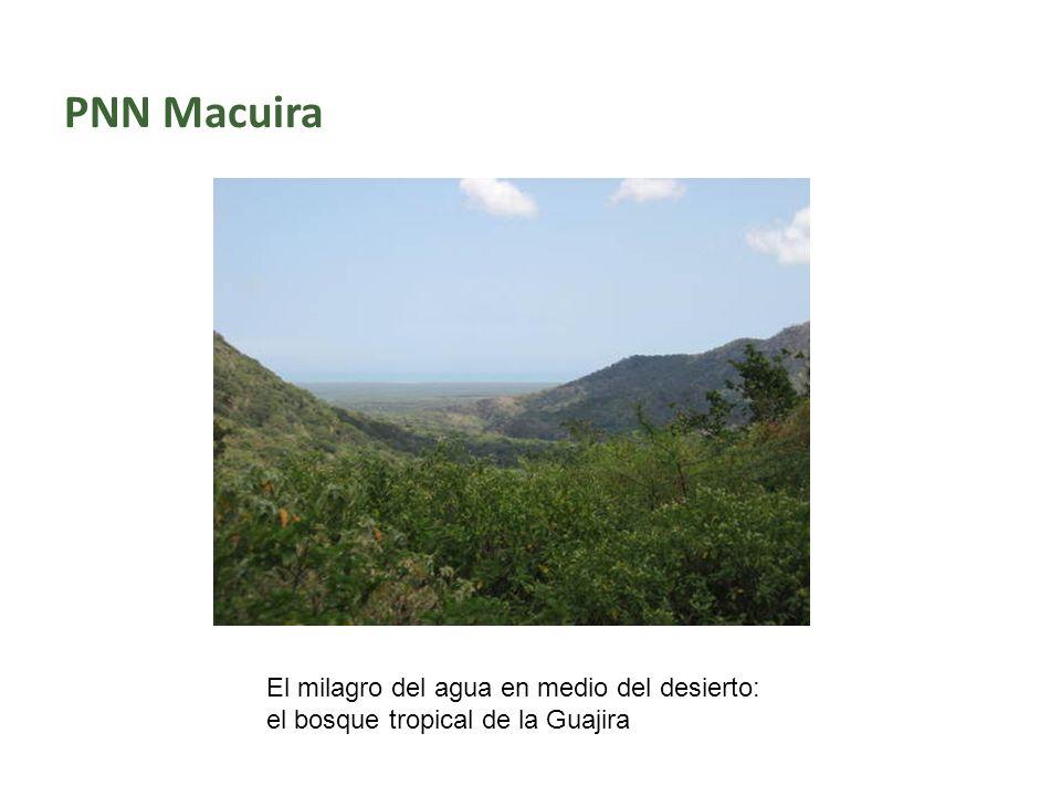 PNN Macuira El milagro del agua en medio del desierto: