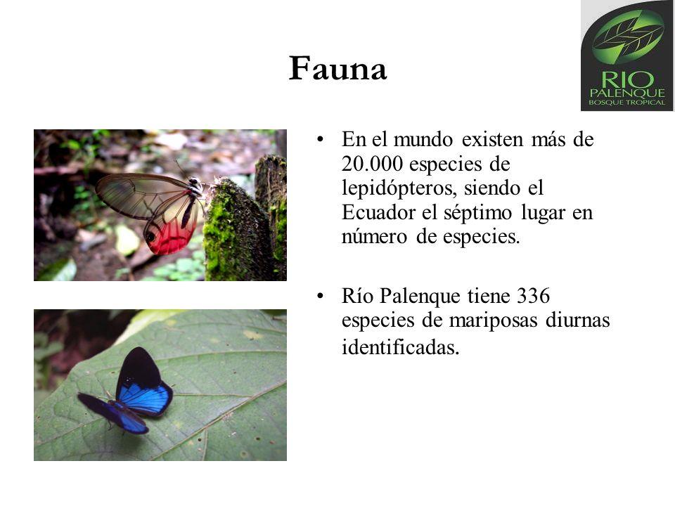 Fauna En el mundo existen más de 20.000 especies de lepidópteros, siendo el Ecuador el séptimo lugar en número de especies.