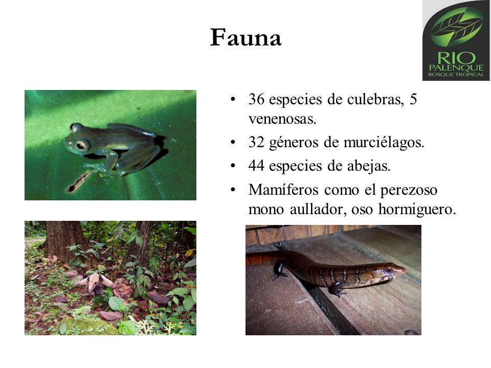 Fauna 36 especies de culebras, 5 venenosas. 32 géneros de murciélagos.