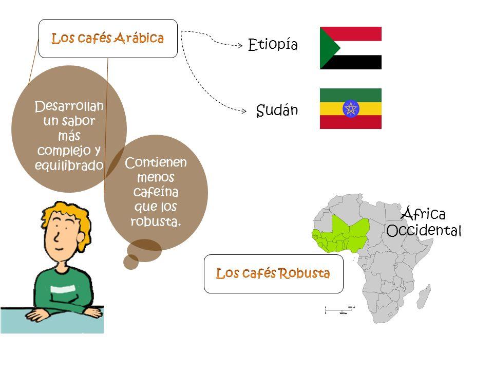 Etiopía Sudán África Occidental Los cafés Arábica
