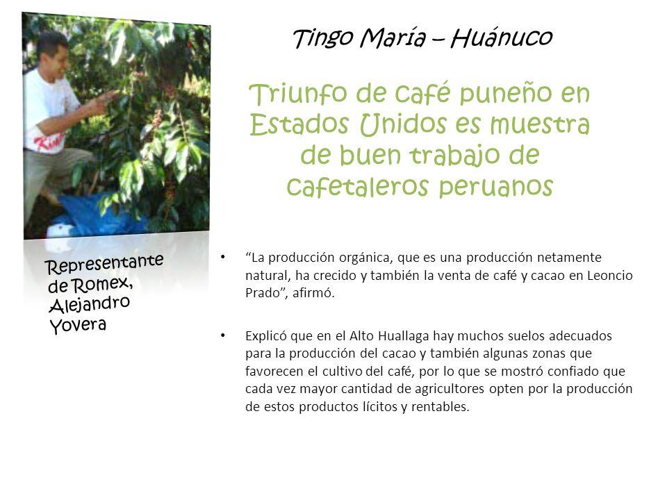 Tingo María – Huánuco Triunfo de café puneño en Estados Unidos es muestra de buen trabajo de cafetaleros peruanos