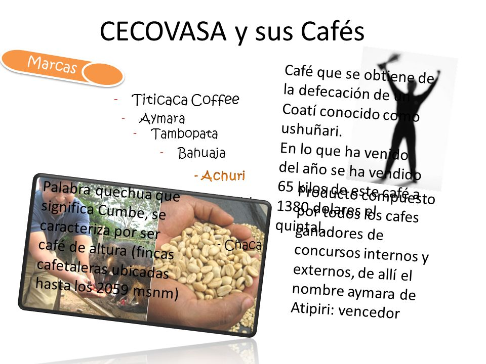 CECOVASA y sus Cafés Marcas. Café que se obtiene de la defecación de un Coatí conocido como ushuñari.