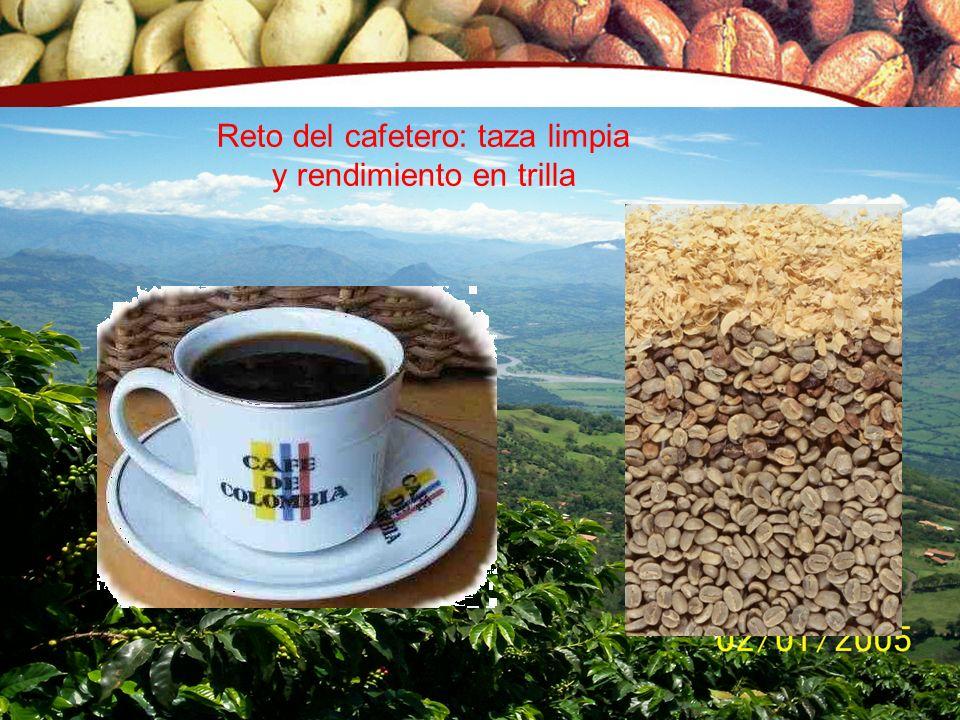 Reto del cafetero: taza limpia y rendimiento en trilla