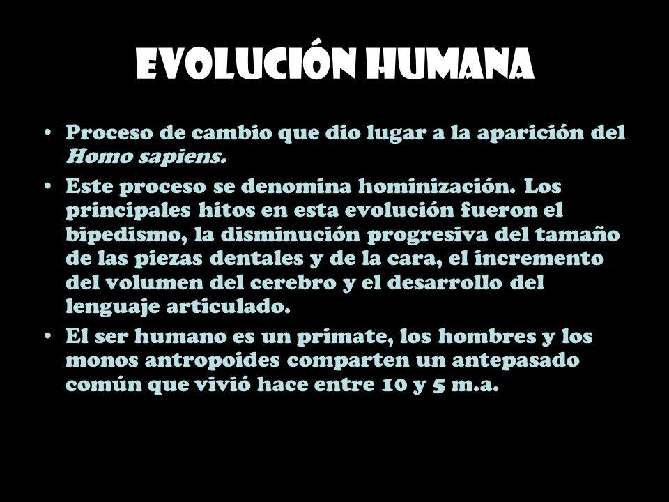 Evolución humana Proceso de cambio que dio lugar a la aparición del Homo sapiens.