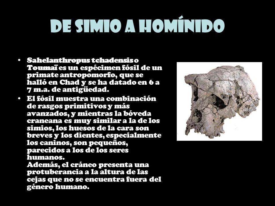 De simio a homínido