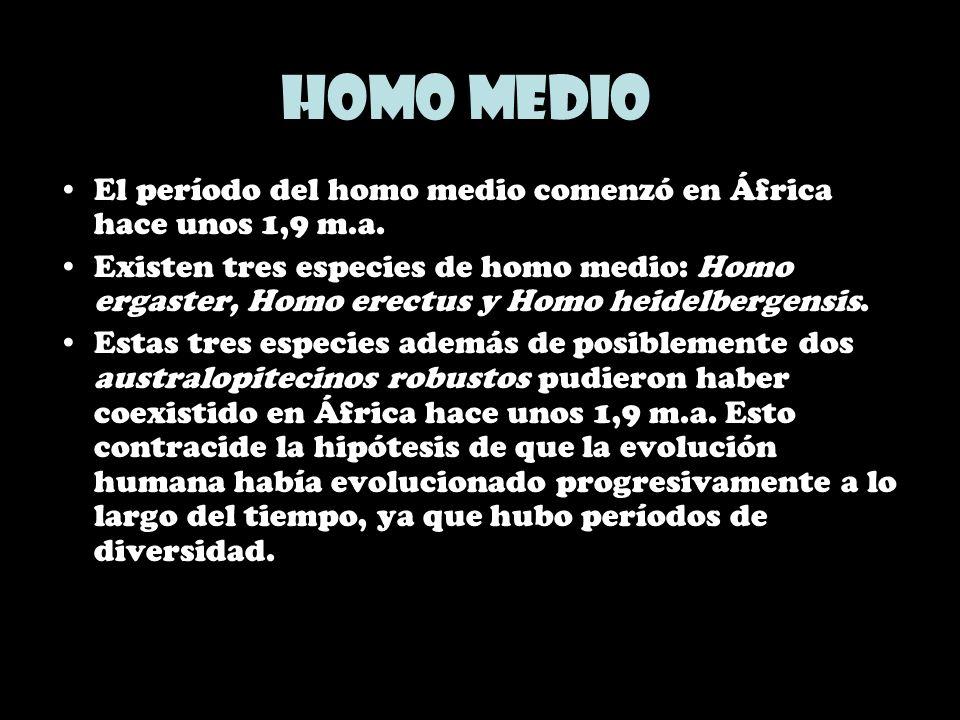 Homo medioEl período del homo medio comenzó en África hace unos 1,9 m.a.