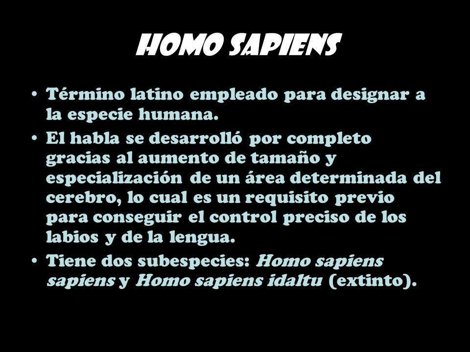 Homo sapiens Término latino empleado para designar a la especie humana.