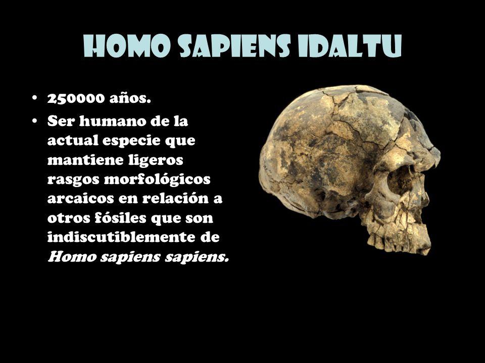 Homo sapiens idaltu 250000 años.