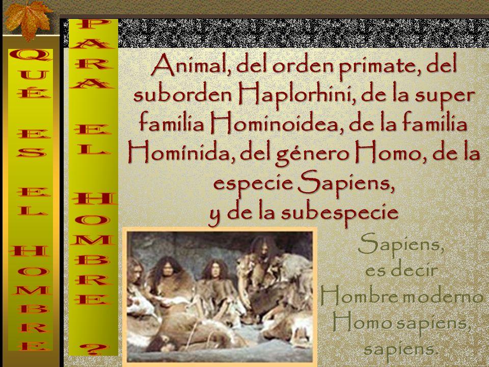 Animal, del orden primate, del suborden Haplorhini, de la super familia Hominoidea, de la familia Homínida, del género Homo, de la especie Sapiens,