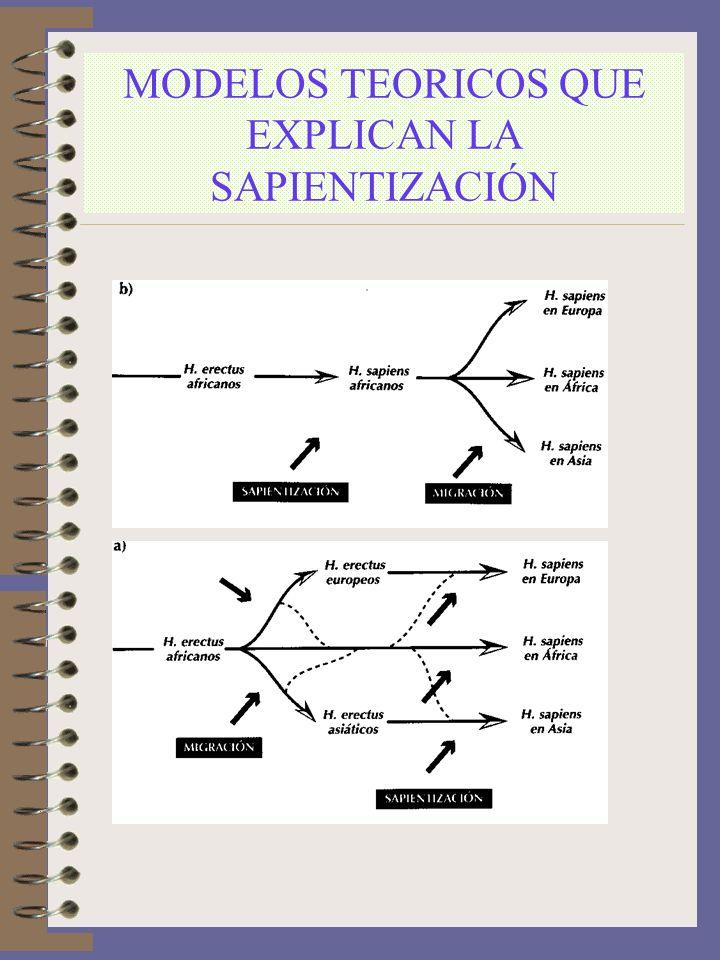 MODELOS TEORICOS QUE EXPLICAN LA SAPIENTIZACIÓN
