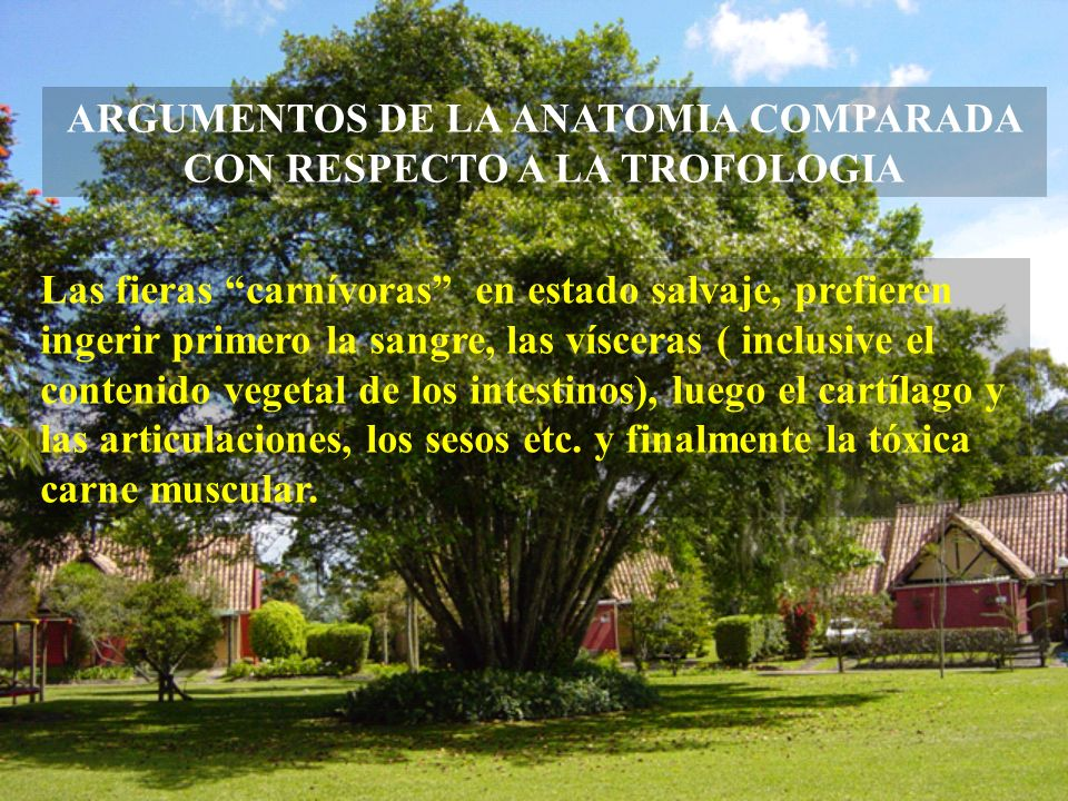 ARGUMENTOS DE LA ANATOMIA COMPARADA CON RESPECTO A LA TROFOLOGIA