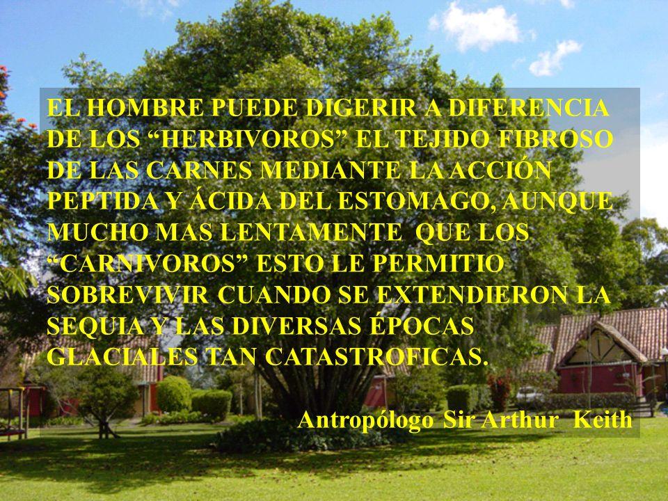 EL HOMBRE PUEDE DIGERIR A DIFERENCIA DE LOS HERBIVOROS EL TEJIDO FIBROSO DE LAS CARNES MEDIANTE LA ACCIÓN PEPTIDA Y ÁCIDA DEL ESTOMAGO, AUNQUE MUCHO MAS LENTAMENTE QUE LOS CARNIVOROS ESTO LE PERMITIO SOBREVIVIR CUANDO SE EXTENDIERON LA SEQUIA Y LAS DIVERSAS ÉPOCAS GLACIALES TAN CATASTROFICAS.