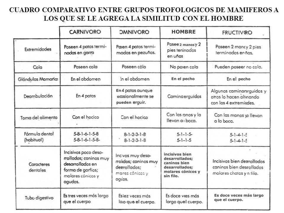 CUADRO COMPARATIVO ENTRE GRUPOS TROFOLOGICOS DE MAMIFEROS A LOS QUE SE LE AGREGA LA SIMILITUD CON EL HOMBRE