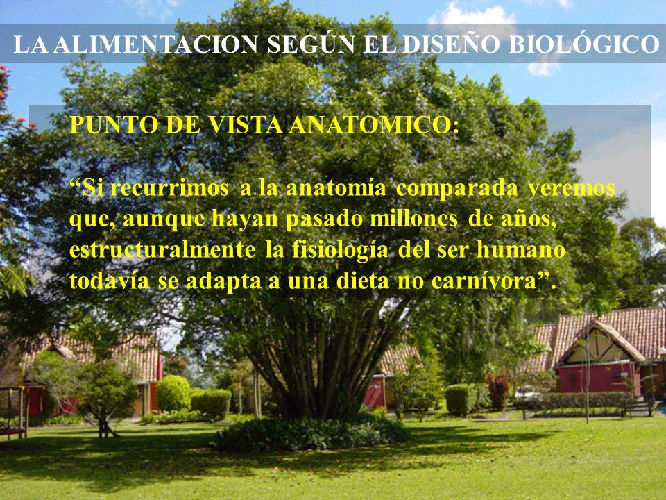 LA ALIMENTACION SEGÚN EL DISEÑO BIOLÓGICO
