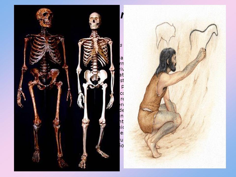 Homo sapiens neanderthalis