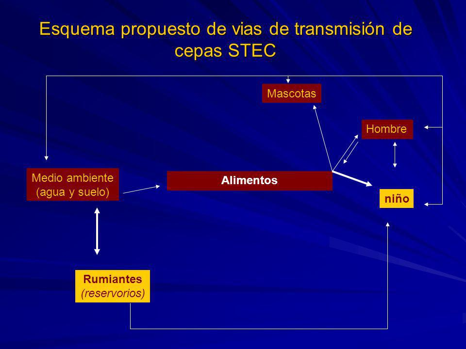Esquema propuesto de vias de transmisión de cepas STEC