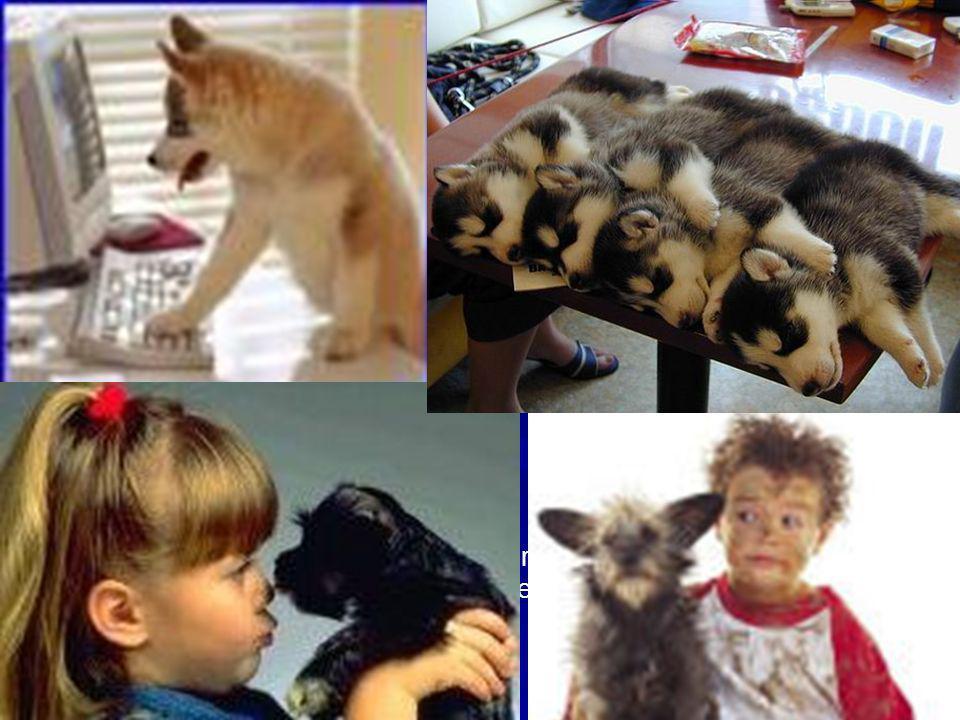 Relación entre el hombre y los animales de compañía en la Ciudad de Buenos Aires: