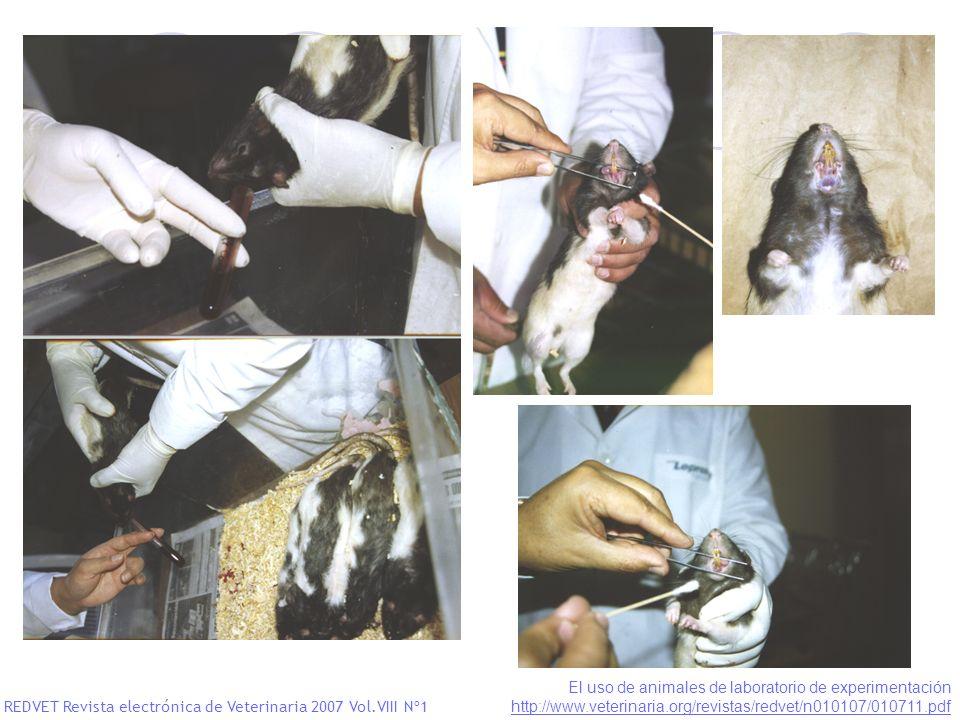 El uso de animales de laboratorio de experimentación