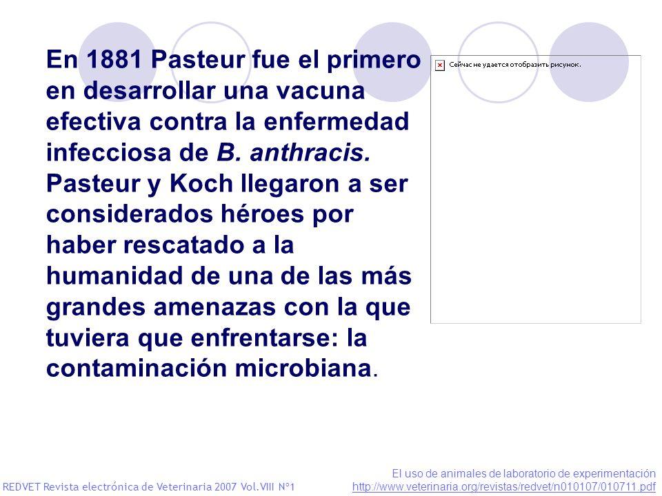 En 1881 Pasteur fue el primero en desarrollar una vacuna efectiva contra la enfermedad infecciosa de B. anthracis.