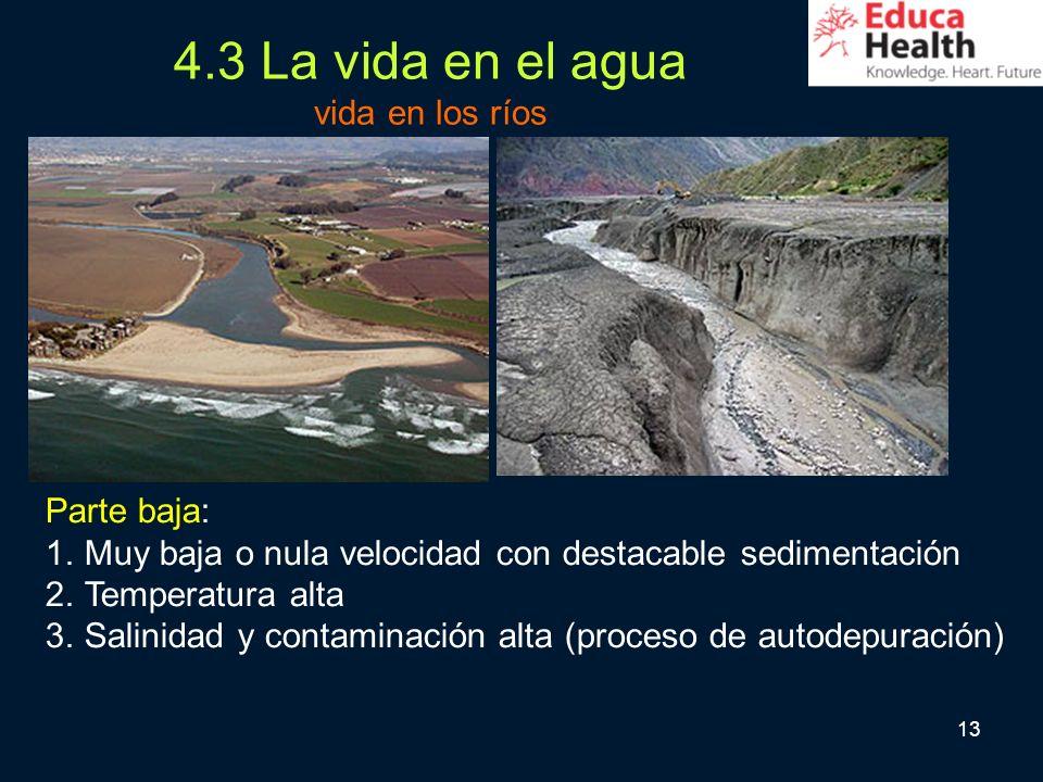 4.3 La vida en el agua vida en los ríos