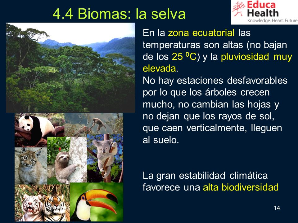 4.4 Biomas: la selva En la zona ecuatorial las temperaturas son altas (no bajan de los 25 0C) y la pluviosidad muy elevada.