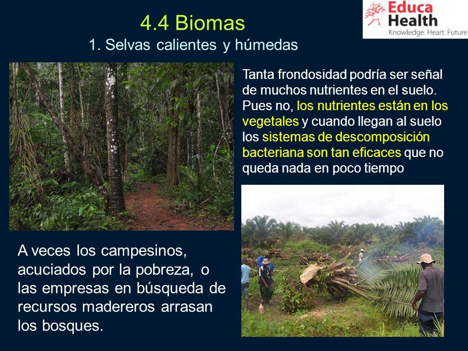 4.4 Biomas 1. Selvas calientes y húmedas