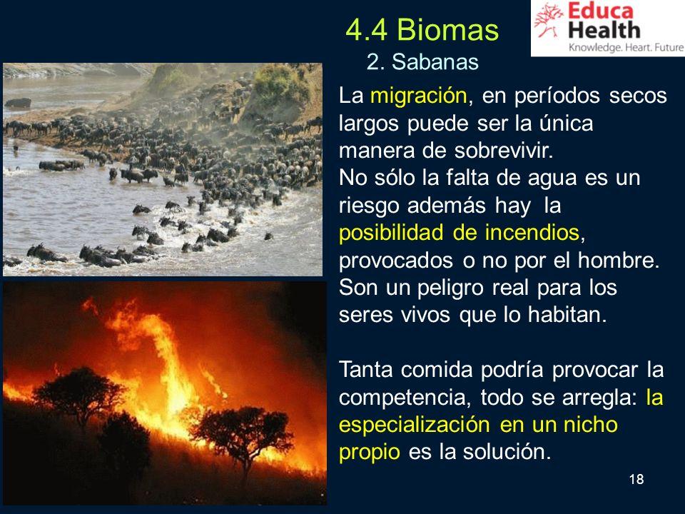 4.4 Biomas 2. Sabanas La migración, en períodos secos largos puede ser la única manera de sobrevivir.