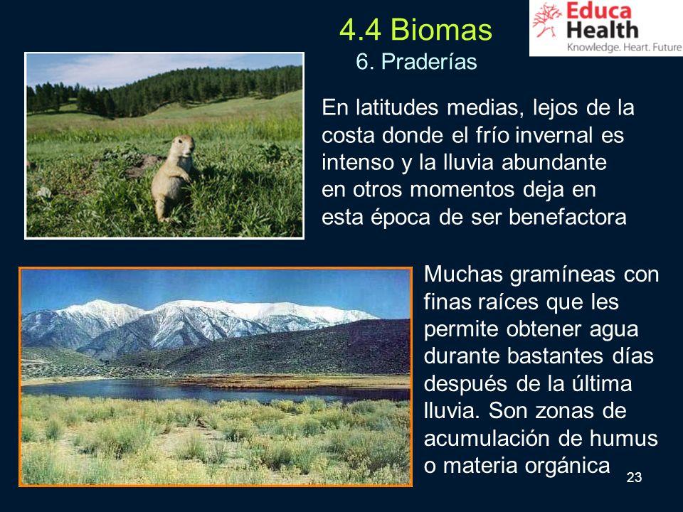 4.4 Biomas 6. Praderías