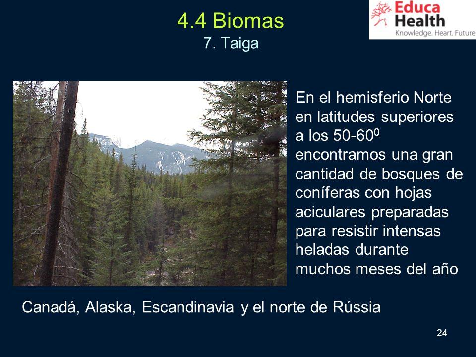 4.4 Biomas 7. Taiga