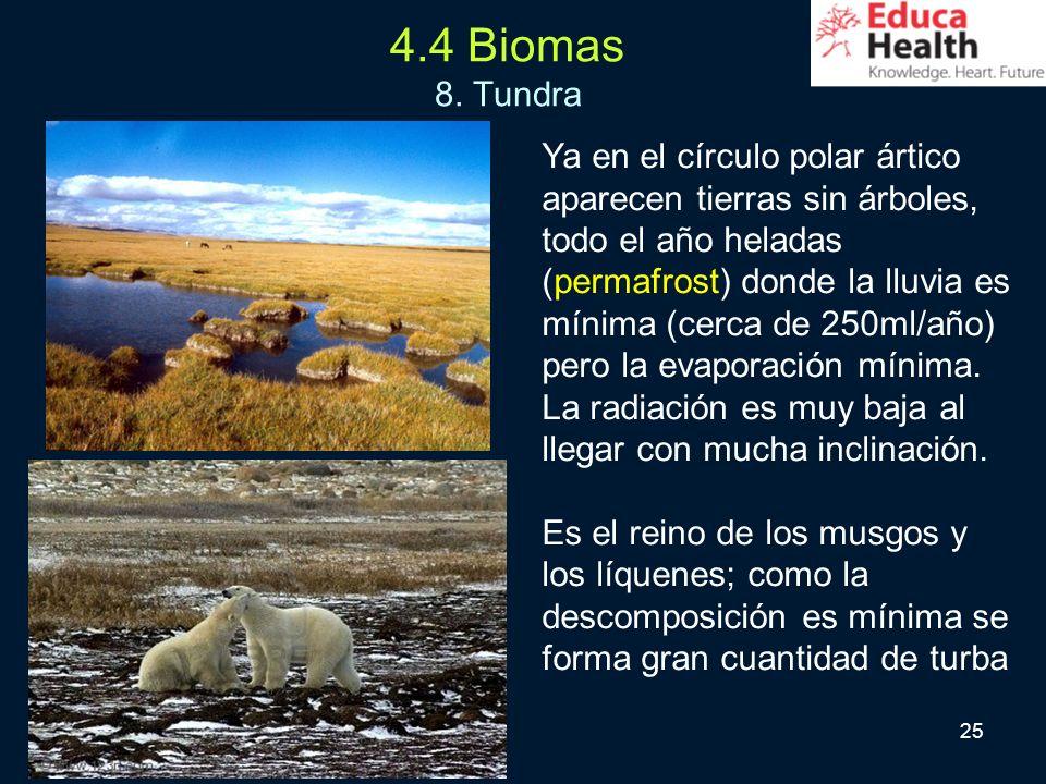 4.4 Biomas 8. Tundra