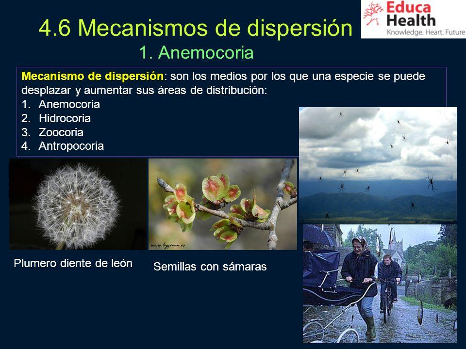 4.6 Mecanismos de dispersión 1. Anemocoria