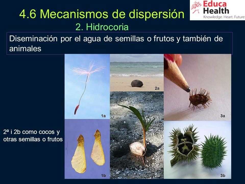 4.6 Mecanismos de dispersión 2. Hidrocoria