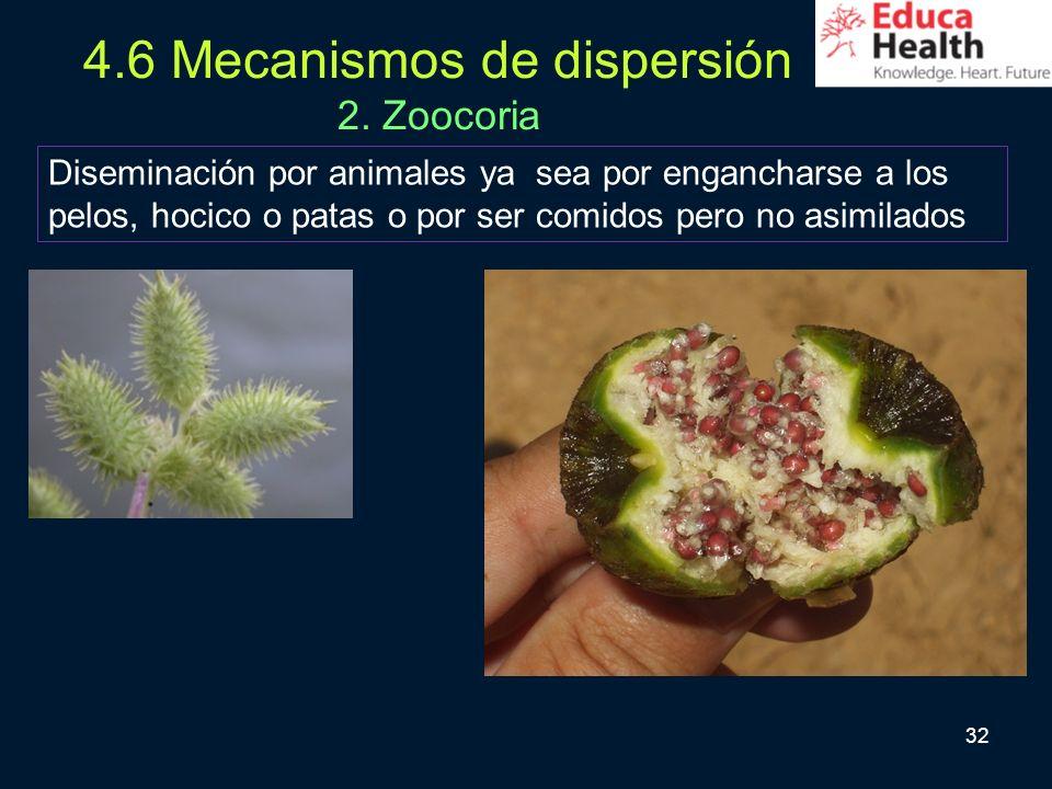 4.6 Mecanismos de dispersión 2. Zoocoria