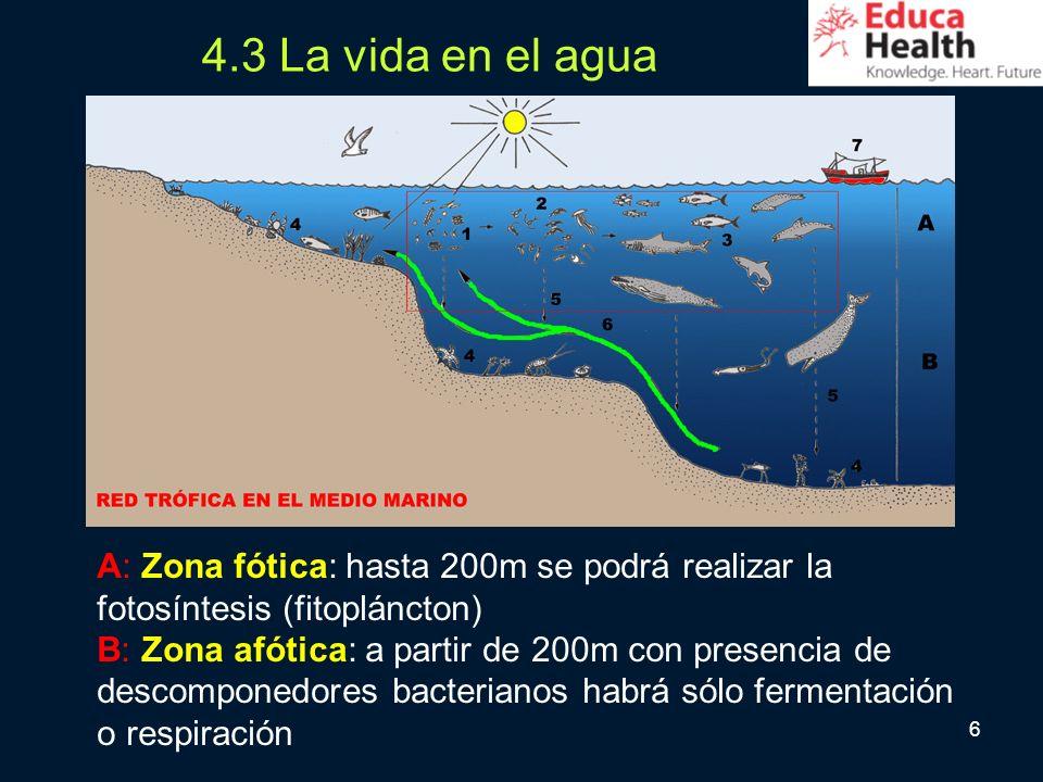 4.3 La vida en el agua A: Zona fótica: hasta 200m se podrá realizar la fotosíntesis (fitopláncton)