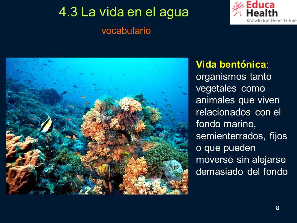 4.3 La vida en el agua vocabulario